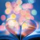 aprendendo-amar-patricia-gebrim