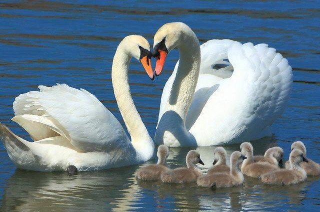 nascimento-do-amor-patricia-gebrim